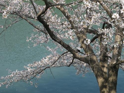 皇居外苑の桜&景色・・・3_c0075701_19305428.jpg