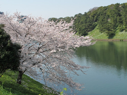 皇居外苑の桜&景色・・・3_c0075701_19305539.jpg