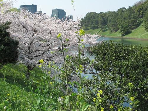 皇居外苑の桜&景色・・・3_c0075701_19305822.jpg