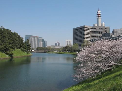 皇居外苑の桜&景色・・・4_c0075701_19374837.jpg