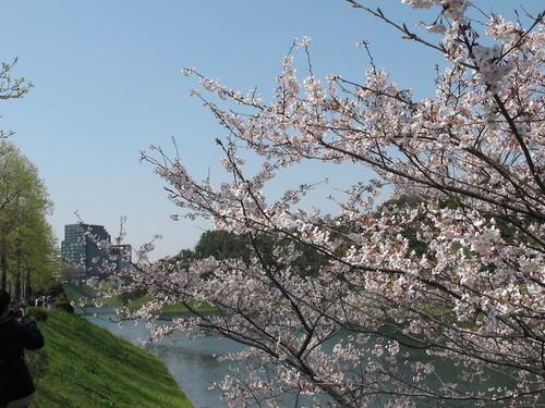 皇居外苑の桜&景色・・・4_c0075701_19375254.jpg