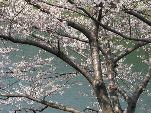 皇居外苑の桜&景色・・・4_c0075701_19375453.jpg