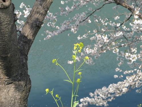 皇居外苑の桜&景色・・・4_c0075701_19375620.jpg