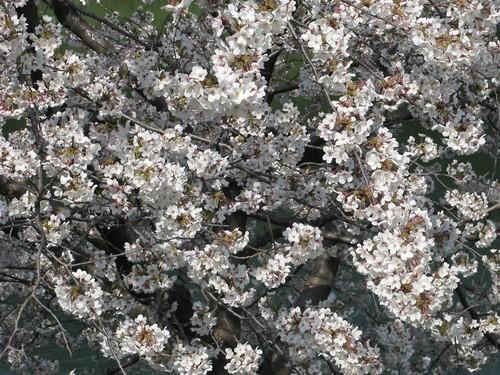 皇居外苑の桜&景色・・・4_c0075701_19375930.jpg