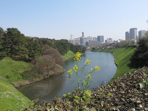 皇居外苑の桜&景色・・・5_c0075701_20185025.jpg
