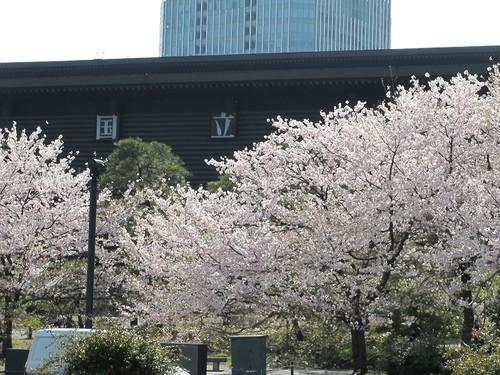 皇居外苑の桜&景色・・・5_c0075701_20185386.jpg