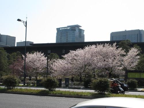皇居外苑の桜&景色・・・5_c0075701_20185554.jpg