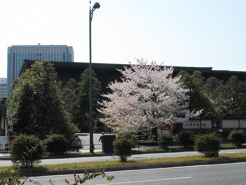 皇居外苑の桜&景色・・・5_c0075701_20185878.jpg