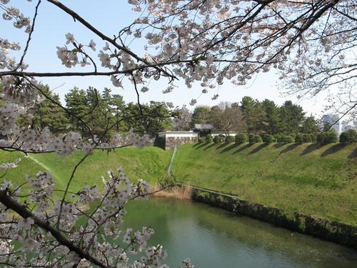 皇居外苑の桜&景色・・・6_c0075701_20281888.jpg