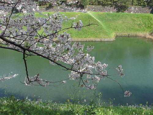 皇居外苑の桜&景色・・・6_c0075701_20282064.jpg
