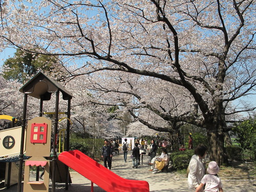 皇居外苑の桜&景色・・・6_c0075701_20282180.jpg