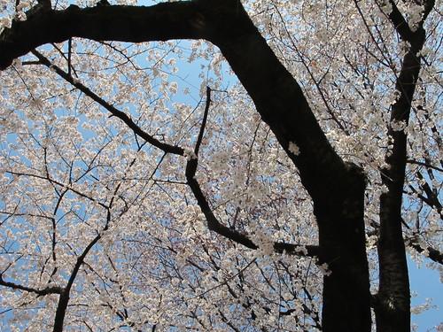 皇居外苑の桜&景色・・・6_c0075701_20282328.jpg