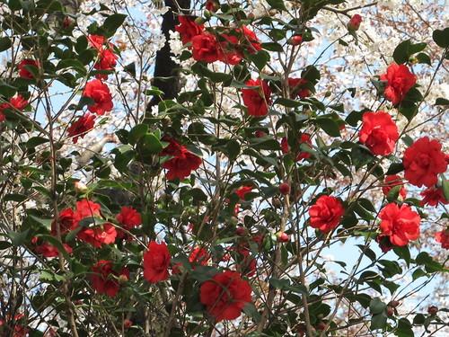 皇居外苑の桜&景色・・・6_c0075701_20282652.jpg