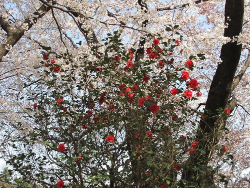 皇居外苑の桜&景色・・・6_c0075701_20282875.jpg