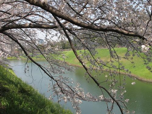 皇居外苑の桜&景色・・・7_c0075701_20361883.jpg
