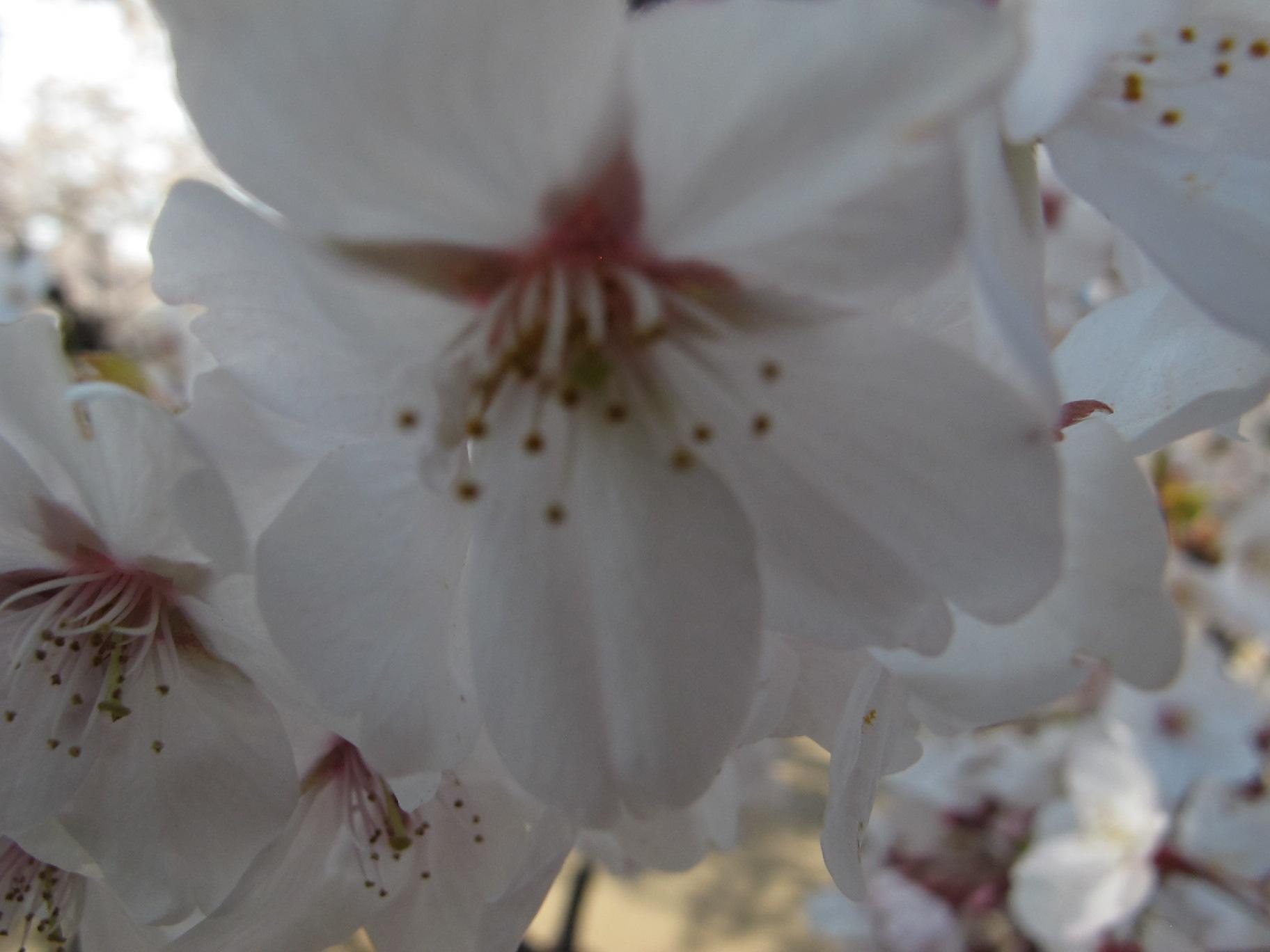 皇居外苑の桜&景色・・・8★★★_c0075701_20472660.jpg