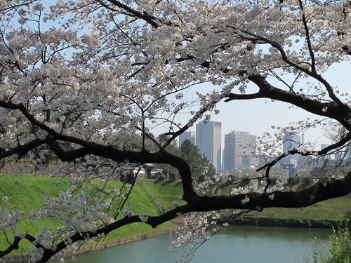 皇居外苑の桜&景色・・・8★★★_c0075701_204729100.jpg