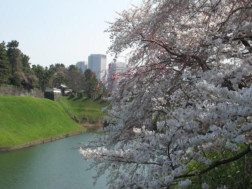 皇居外苑の桜&景色・・・8★★★_c0075701_20472998.jpg