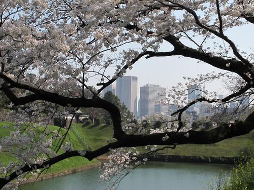 皇居外苑の桜&景色・・・8★★★_c0075701_20473364.jpg