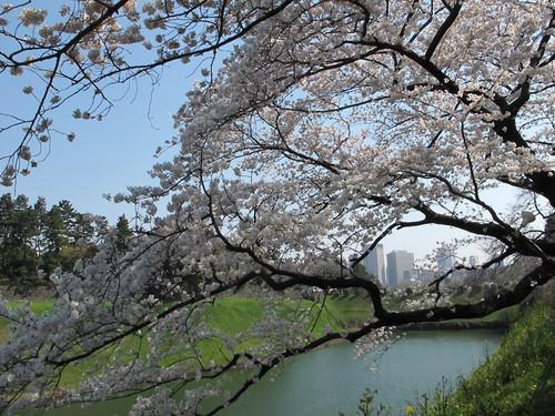 皇居外苑の桜&景色・・・8★★★_c0075701_20473525.jpg