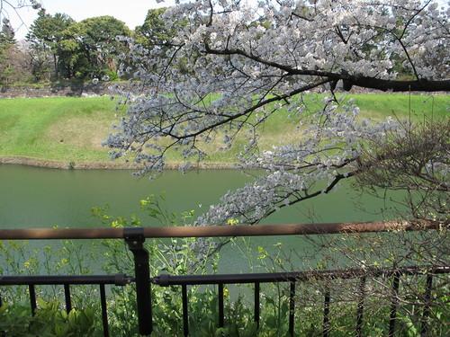 皇居外苑の桜&景色・・・8★★★_c0075701_20473847.jpg