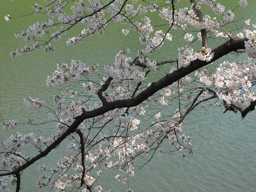 皇居外苑の桜&景色・・・9★★★_c0075701_2104162.jpg