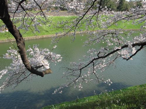 皇居外苑の桜&景色・・・9★★★_c0075701_2104475.jpg