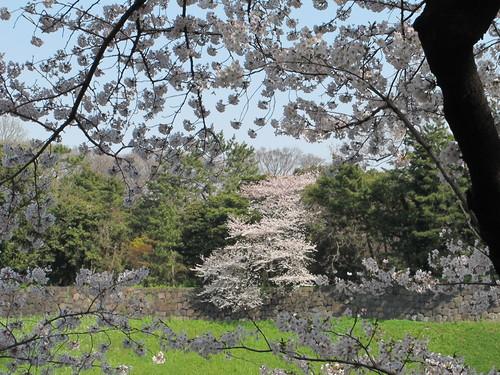 皇居外苑の桜&景色・・・9★★★_c0075701_2104629.jpg
