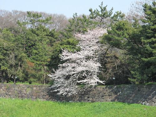 皇居外苑の桜&景色・・・9★★★_c0075701_2105217.jpg