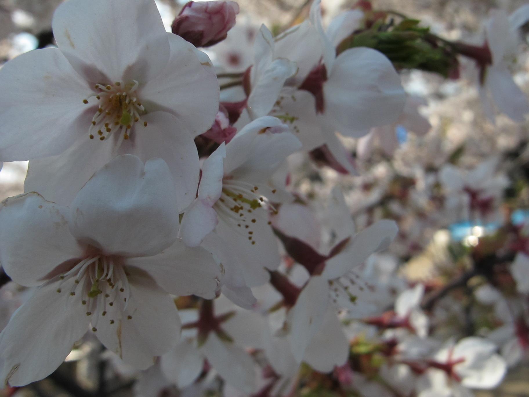 皇居外苑の桜&景色・・・9★★★_c0075701_2105434.jpg