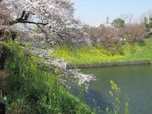 皇居外苑の桜&景色・・・10_c0075701_21111876.jpg