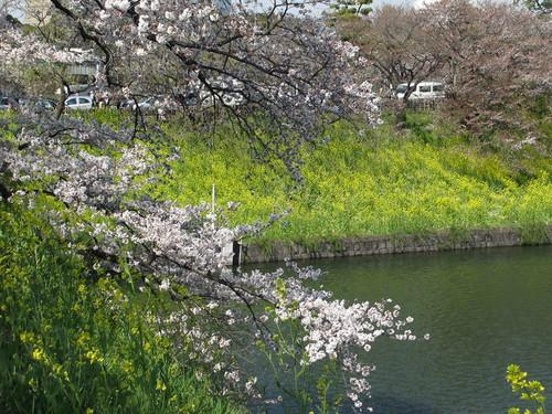 皇居外苑の桜&景色・・・10_c0075701_2111208.jpg