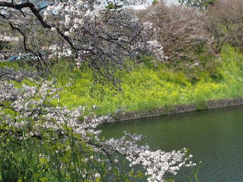 皇居外苑の桜&景色・・・10_c0075701_21112236.jpg