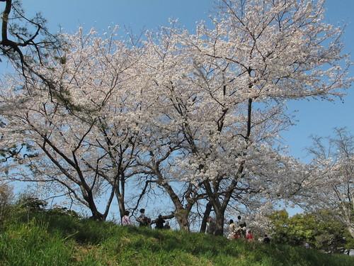 皇居外苑の桜&景色・・・11★★★_c0075701_21234394.jpg
