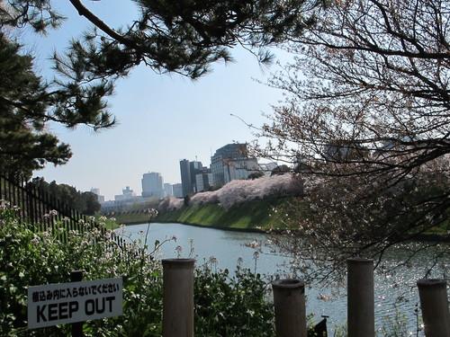 皇居外苑の桜&景色・・・11★★★_c0075701_2123458.jpg