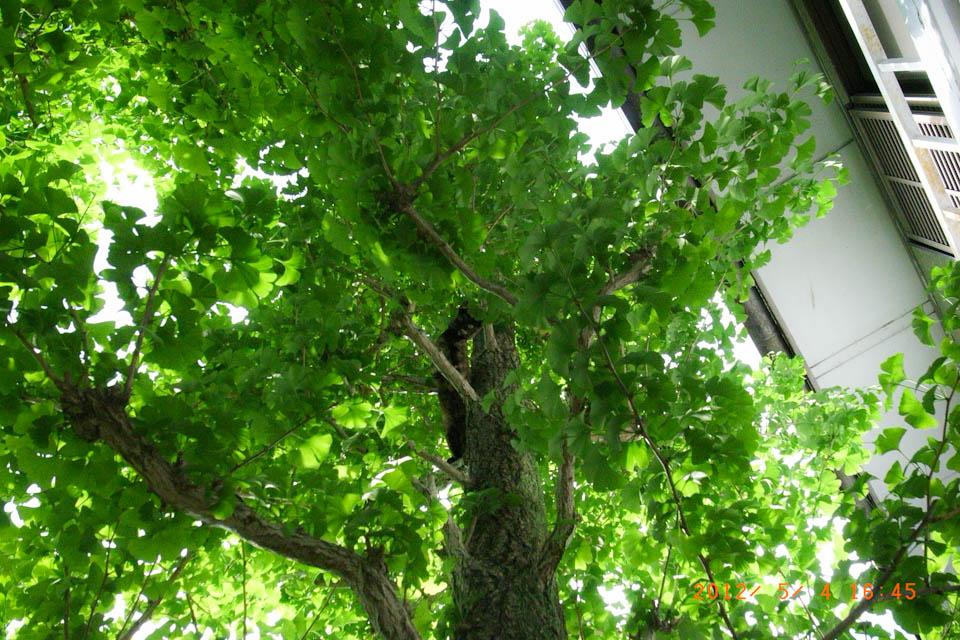 新緑_e0132518_2225875.jpg