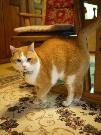 猫のお友だち ふくちゃん編。_a0143140_16132694.jpg