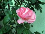 春ですね~_a0142059_9545757.jpg