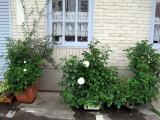春ですね~_a0142059_9552342.jpg