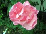 春ですね~_a0142059_955994.jpg