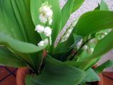 春ですね~_a0142059_9564884.jpg