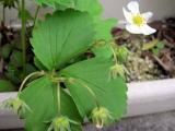 春ですね~_a0142059_957463.jpg