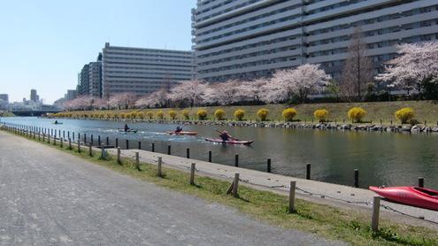 水彩都市江東に桜満開_c0249569_20323213.jpg
