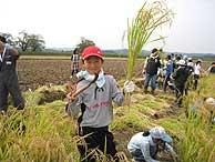 稲刈り体験(緑が丘小・北郷小)_d0247484_1622897.jpg