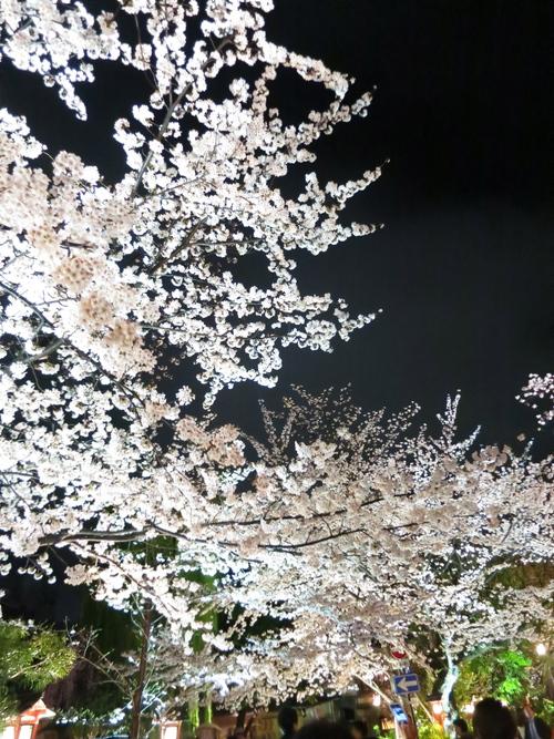 夜桜_c0224085_2251520.jpg