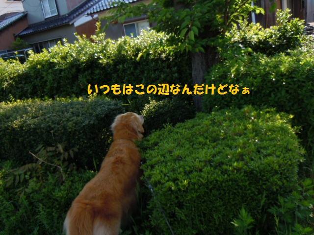 f0114128_18332510.jpg