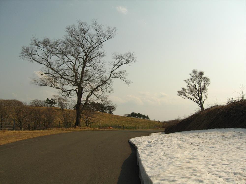 高原の春へと向かう道_d0001843_9402040.jpg