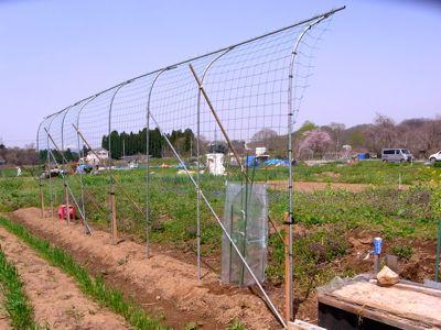 カテサイ(家庭菜園)の記録 H24.5.5_c0063348_736235.jpg