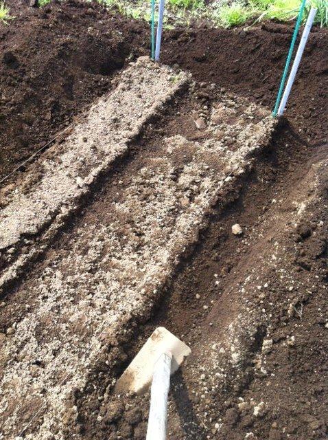 ナス&パプリカ&唐辛子の苗全て定植し終わりました_c0222448_12214383.jpg