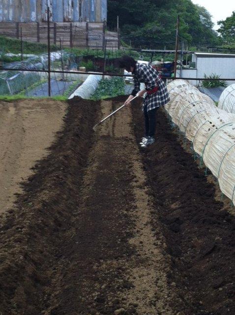 ナス&パプリカ&唐辛子の苗全て定植し終わりました_c0222448_12215290.jpg